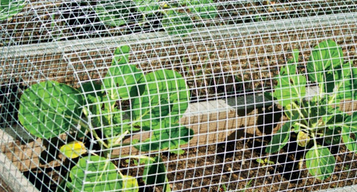 Wire mesh agricultural products